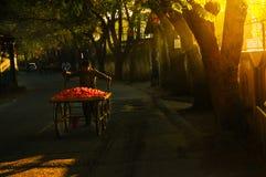 Grönsakförsäljarecykel på gator Arkivfoton
