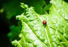Grönsakgrönsallat Royaltyfri Fotografi
