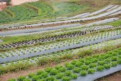 Grönsakkoloni Royaltyfri Fotografi