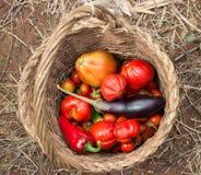 Grönsakkorg fotografering för bildbyråer