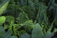 grönsakormbunke Arkivfoton