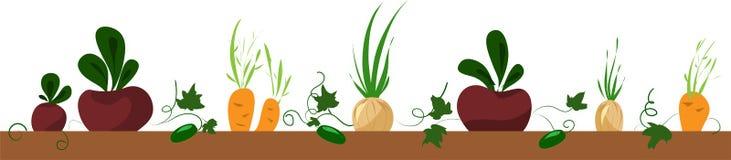 Grönsaksäng, ram med beta, morot, lök vektor illustrationer