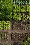 Grönsakträdgård Royaltyfria Bilder