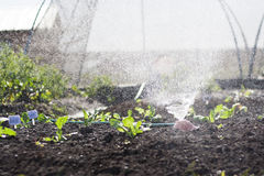 Grönsakträdgård Arkivfoton