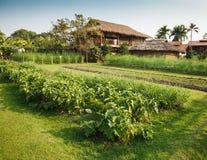 Grönsakträdgård Arkivfoto