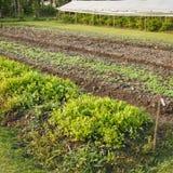 Grönsakträdgård Royaltyfri Bild