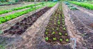 Grönsakträdgård Arkivbild