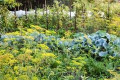 Grönsakträdgård efter regn i sommarafton Royaltyfria Foton