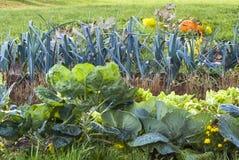 Grönsakträdgård, formell trädgård, pumpa, purjolök, gräs, apelsin, G Royaltyfri Fotografi