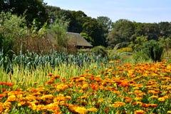 Grönsakträdgård i Augusti. Fotografering för Bildbyråer