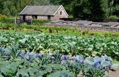 Grönsakträdgård i Augusti. Arkivbild