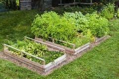 Grönsakträdgård i lyftta askar Arkivbilder