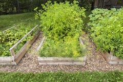 Grönsakträdgård i lyftta askar Arkivfoto