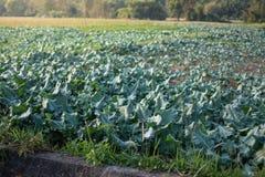 Grönsakträdgård i Pua, Thailand Arkivfoton