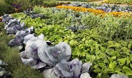 Grönsakträdgård med blandade skördar arkivbilder