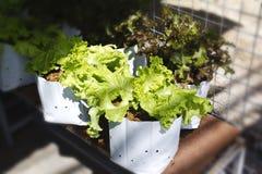 Grönsakväxter Royaltyfria Bilder