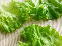 grönsallat Royaltyfria Bilder