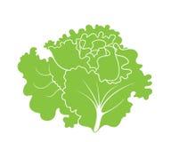 Grönsallat Bladsallad stock illustrationer