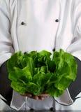 grönsallat för holding för smörkock ny Royaltyfri Foto