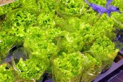 Grönsallat och grönsaker Royaltyfri Fotografi