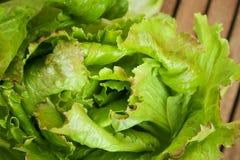 Grönsallat på trätabellen Arkivfoto