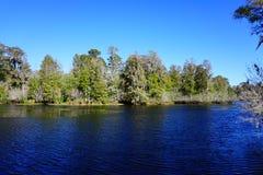 Grönsallat sjö Arkivbilder