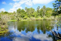 Grönsallat sjö Royaltyfri Fotografi