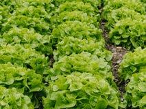 grönsallater Arkivfoto