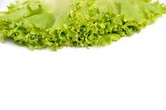 Grönsallatgrupp Arkivbilder