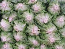 grönsallatmarknad royaltyfri fotografi