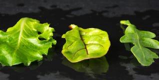 Grönsallatsalladsidor på stenplattan fotografering för bildbyråer