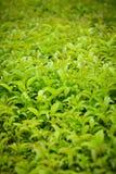 grönska Royaltyfri Foto