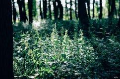 grönska Arkivfoton