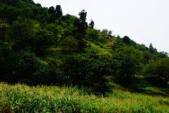 grönska Fotografering för Bildbyråer