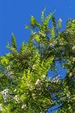 grönska Royaltyfria Bilder