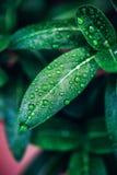 grönska Royaltyfri Fotografi