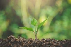 Grönska av den unga växten och plantan växer i jordintelligensen arkivfoto