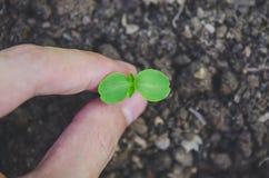 Grönska av den unga växten och plantan växer i jordintelligensen fotografering för bildbyråer