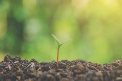 Grönska av den unga växten och plantan växer i jordintelligensen royaltyfri foto