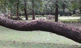 Grönska av Kolkata Royaltyfria Bilder