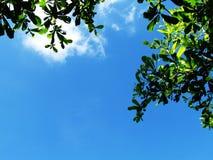Grönska av trädet lämnar againt blå himmel Arkivfoto