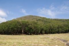 Grönska gräs bergträdlandskap Arkivbilder