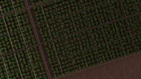 Grönska i burken, bästa sikt stock video