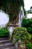 Grönska i Georgia, Batumi botanisk trädgård Royaltyfria Bilder