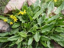 Grönska och blomma dekorativt gräs i stenarna royaltyfri fotografi