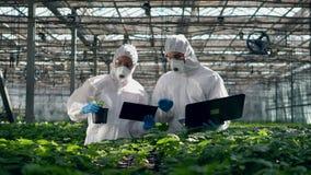 Grönska och två agronomer som arbetar på bärbara datorer och samtal stock video