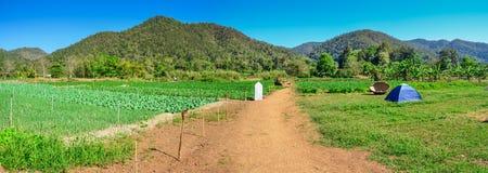 Grönskabakgrund, kullepanoramasikten och stawberry lantgård om dagen, naturliga Landscapse Chiang Mai Thailand Royaltyfri Fotografi