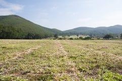 Grönskagräs bland berget arkivfoton