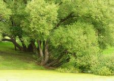 Grönskan på sjön Royaltyfria Foton