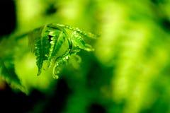 grönskande färg Arkivbild